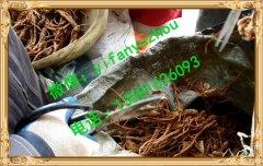 茶油鸭做法?怎么做才是正确的做法?我为什么做不出飘香的味道